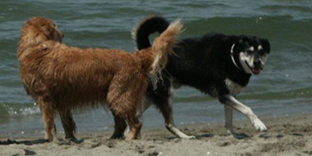 Strand_Hund1