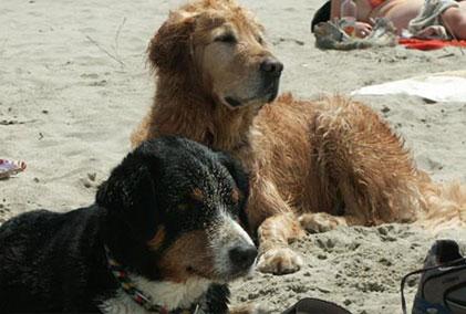 Toskana Urlaub, am Strand mit Hund in der Toskana