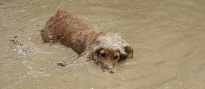 Toskana Urlaub mit dem Hund