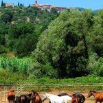 Pferde von Montebelli